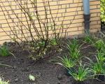 Bepflanzung_Lindenplaetzchen_Lembeck_10.04.2021_012