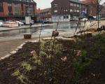 Bepflanzung_Lindenplaetzchen_Lembeck_10.04.2021_018