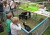 Tiermarkt_Lembeck_07.05.2017_1600px_Foto_Lembecker.de_Frank_Langenhorst_005