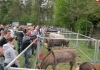 Tiermarkt_Lembeck_07.05.2017_1600px_Foto_Lembecker.de_Frank_Langenhorst_007