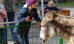 Tiermarkt_Lembeck_05.05.2019_Foto_Lembeck.de_Frank_Langenhorst_019