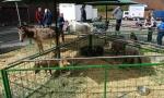 Tiermarkt_Lembeck_05.05.2019_Foto_Lembeck.de_Frank_Langenhorst_020