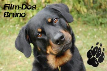Foto: meinhund-messe.de