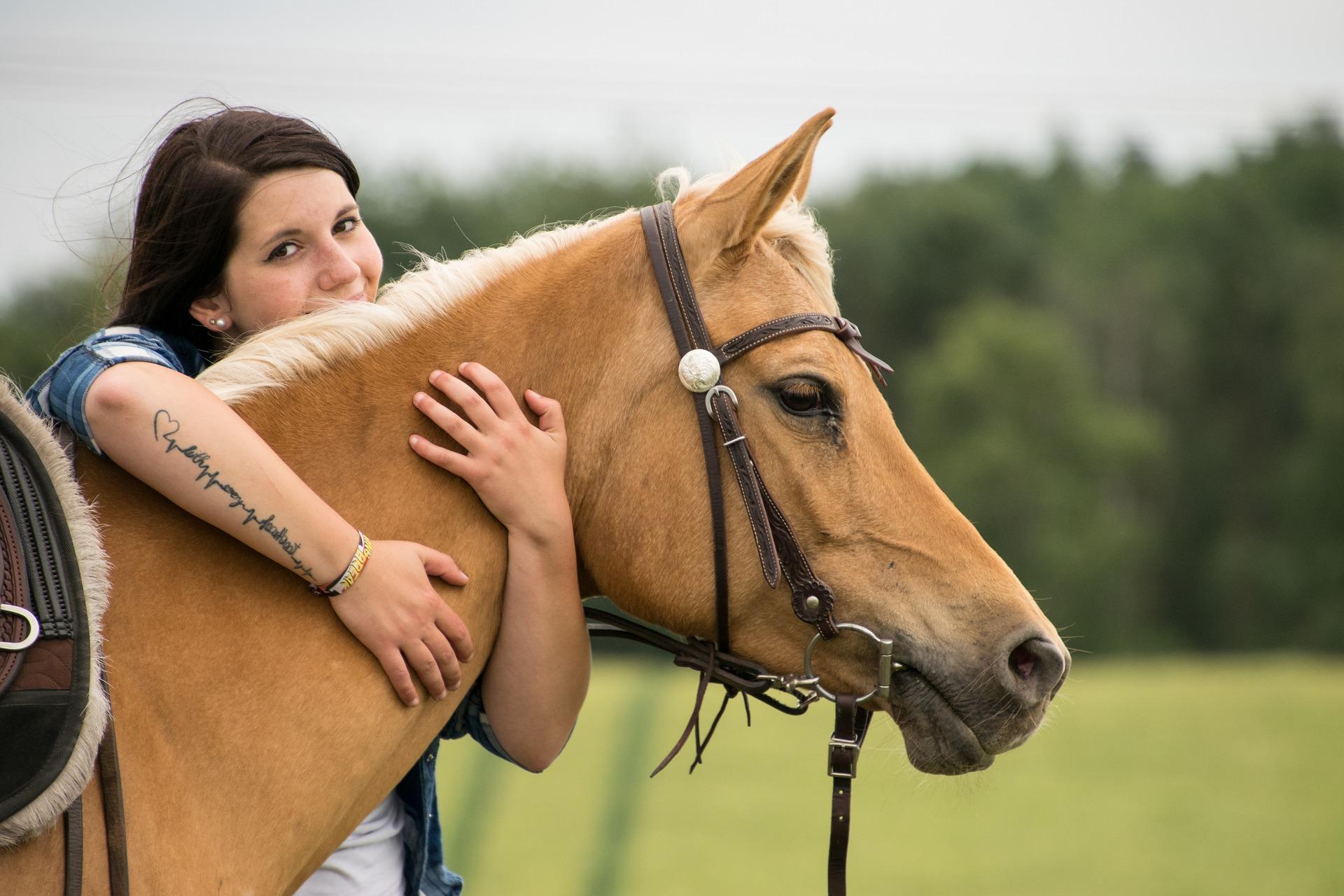 Pferd, Pferdewiese, Pferdefreunde