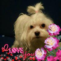 Profilbild von Ralli Ralle